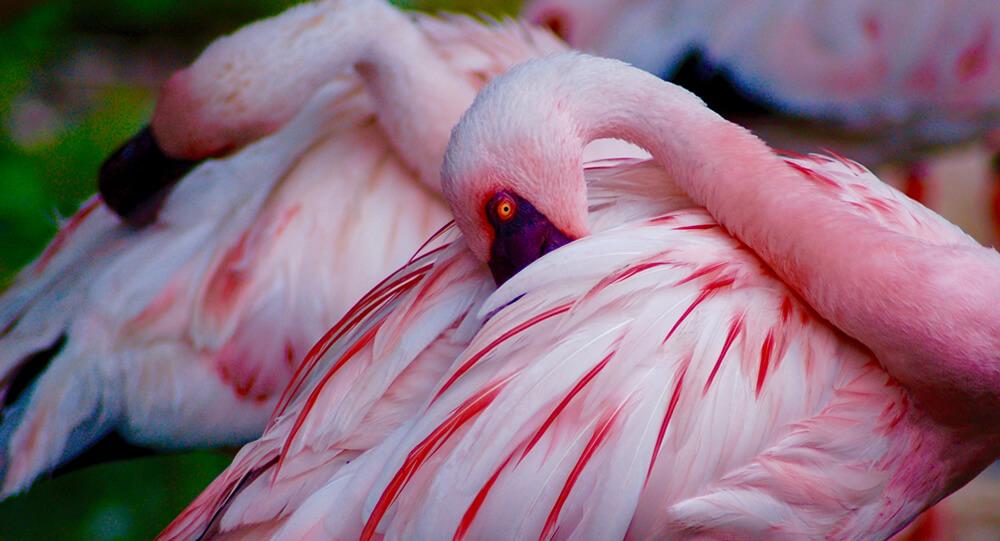 todd-cravens-flamingos